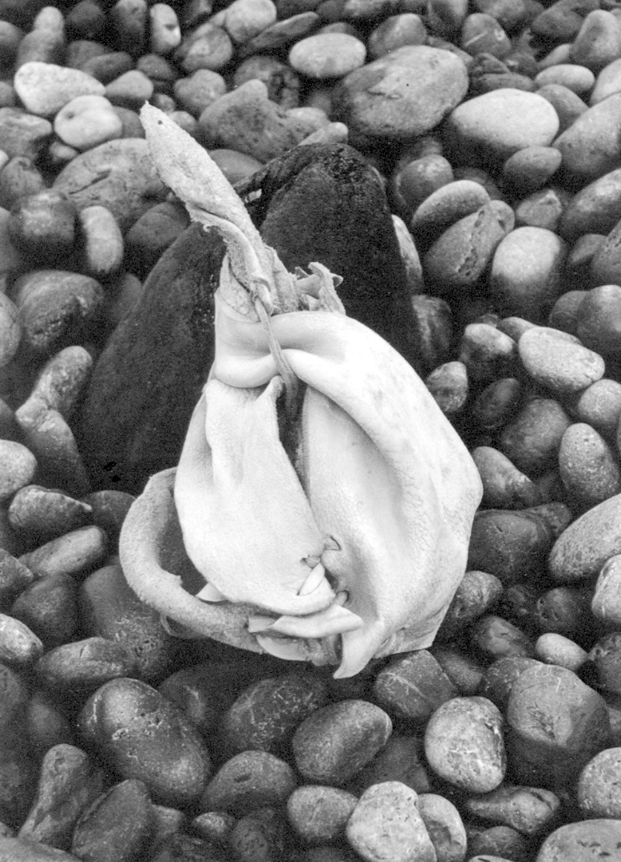 Nouerie Sculpture Cuir galet Noir et blanc